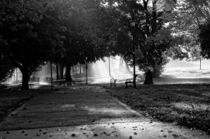 morning in the park (1 of 1)-c5.jpg